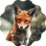 Fox Name Generator - Find out the best fox name