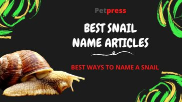 snail-name-articles