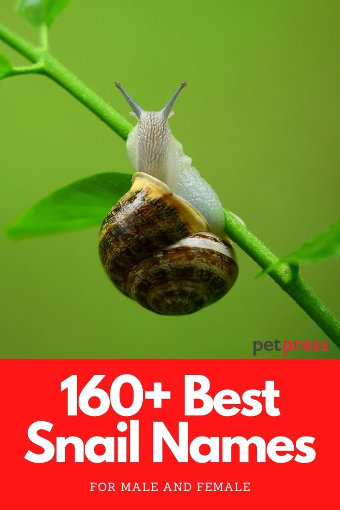 best snail names for naming a pet snail
