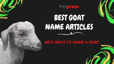 goat-name-articles