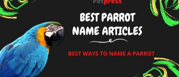parrot-name-articles