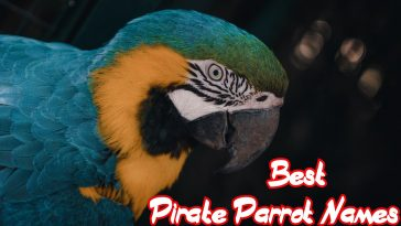 pirate-parrot-names