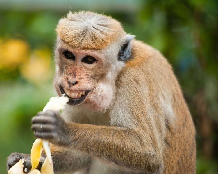 Monkey Name Generator | Petpress - Funny