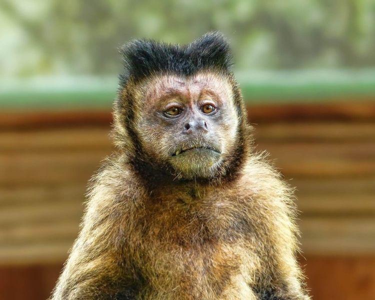 Monkey Name Generator | Petpress - Tough