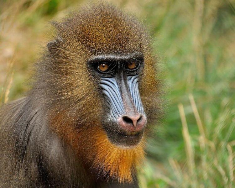 Monkey Name Generator | Petpress - Unique