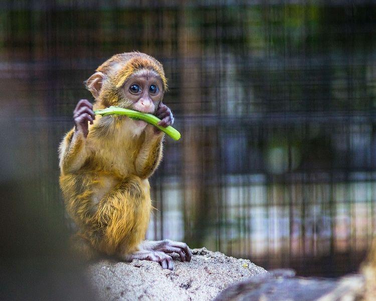 Monkey Name Generator | Petpress - funny monkey name