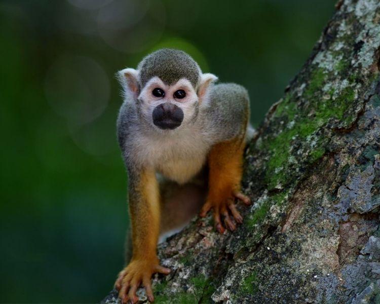 Monkey Name Generator | Petpress - tough monkey name