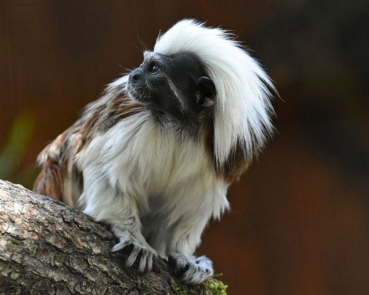 Monkey Name Generator | Petpress - unique monkey name