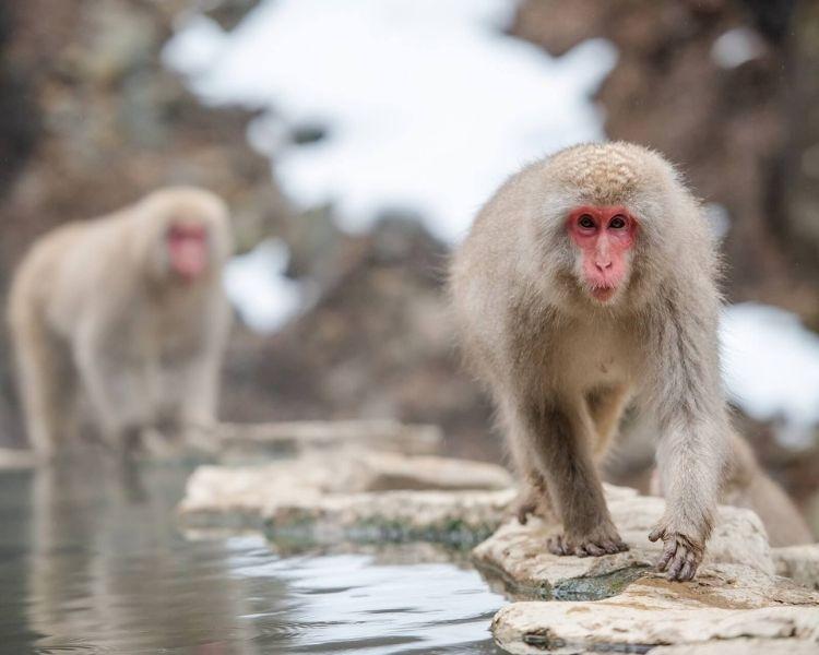 Monkey Name Generator | Petpress - Girl unique monkey