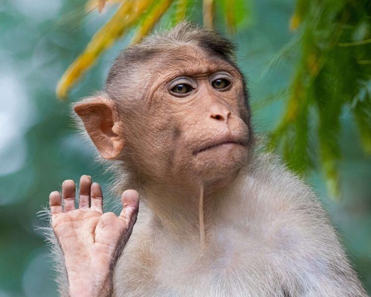 Monkey Name Generator | Petpress - Girl funny monkey