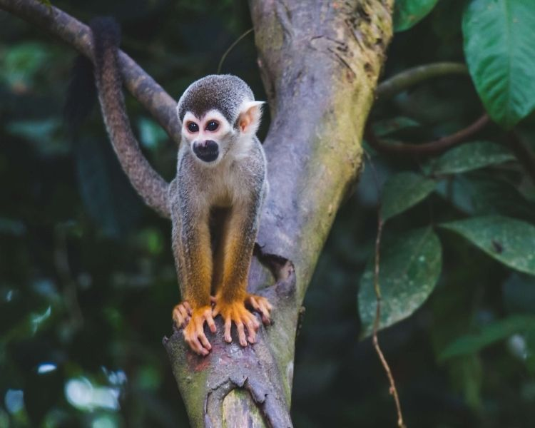 Monkey Name Generator | Petpress - Girl tough monkey