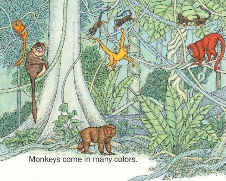Monkey Name Generator | Petpress - Color