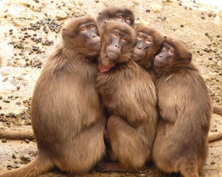Monkey Name Generator | Petpress - Hair