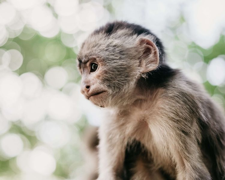Monkey Name Generator | Petpress - Instagram page