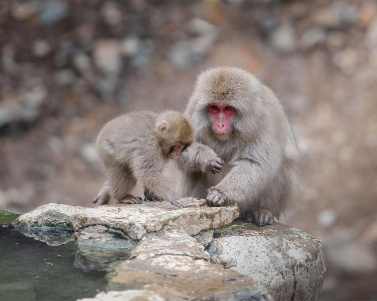 Monkey Name Generator | Petpress - Size