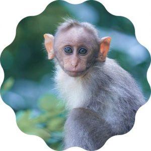 Monkey Name Generator | PetPress