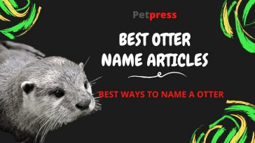 otter-name-articles