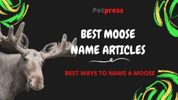 moose-name-articles