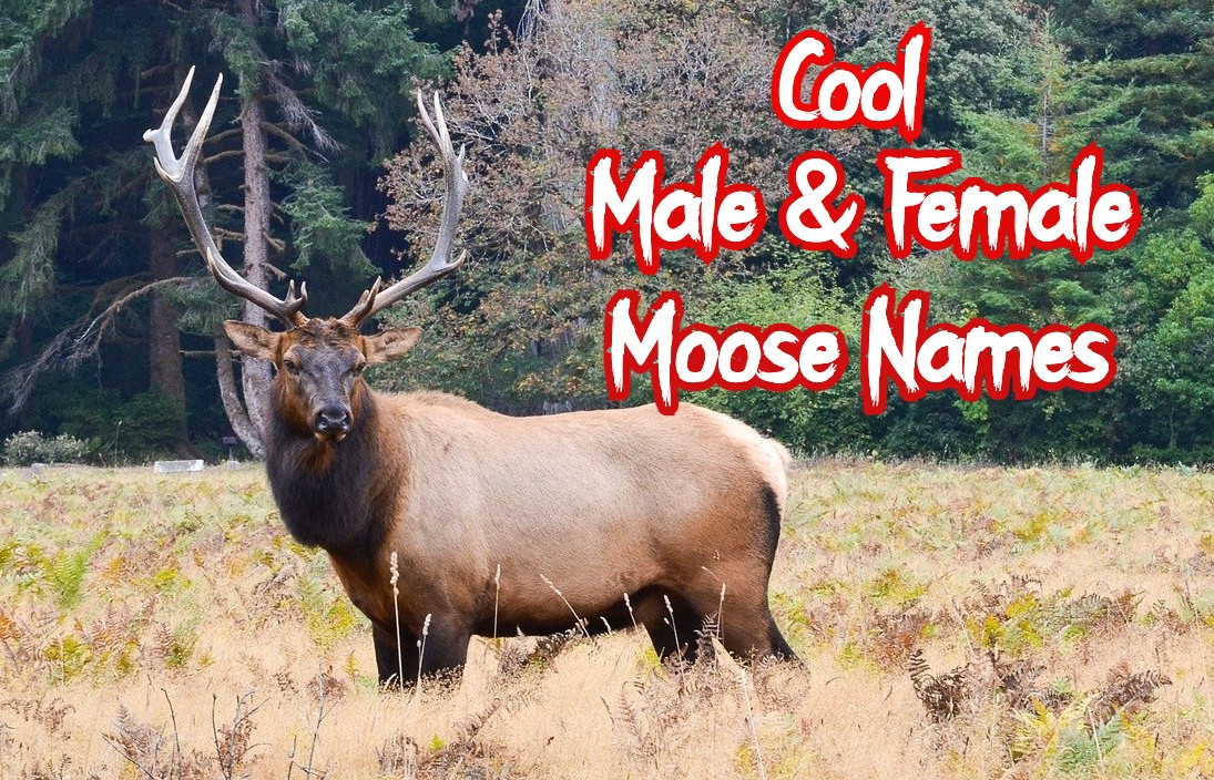 cool-moose-names
