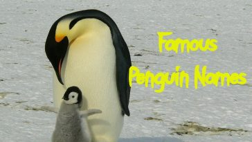famous-penguin-names