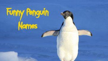 funny-penguin-names