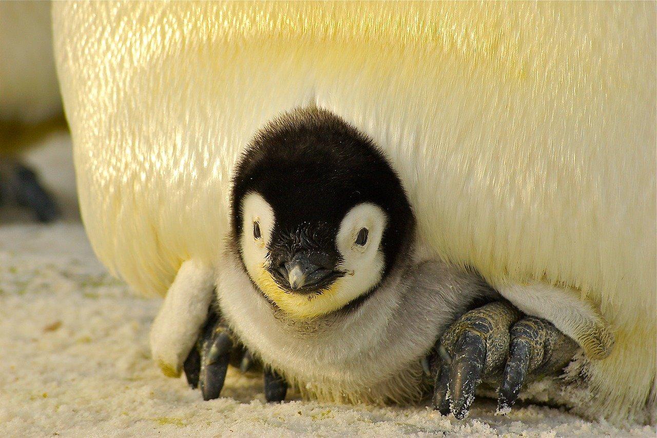 cute penguin names for naming a penguin