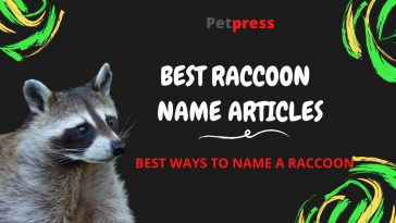 raccoon-name-articles