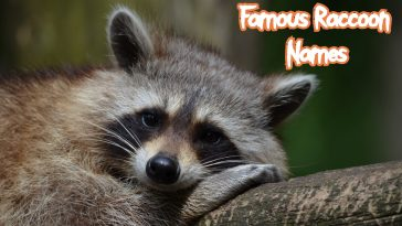 famous-raccoon-names