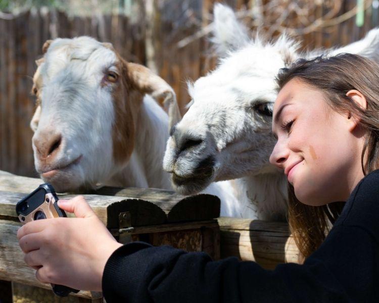 Goat Name Generator - famous girl goat