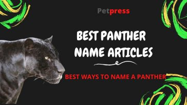 panther-name-articles