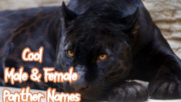 cool-panther-names