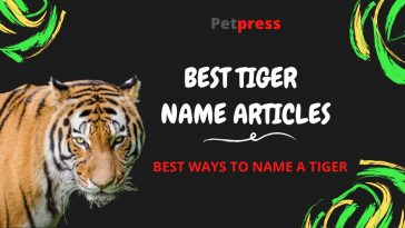 tiger-name-articles