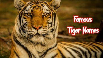 famous-tiger-names