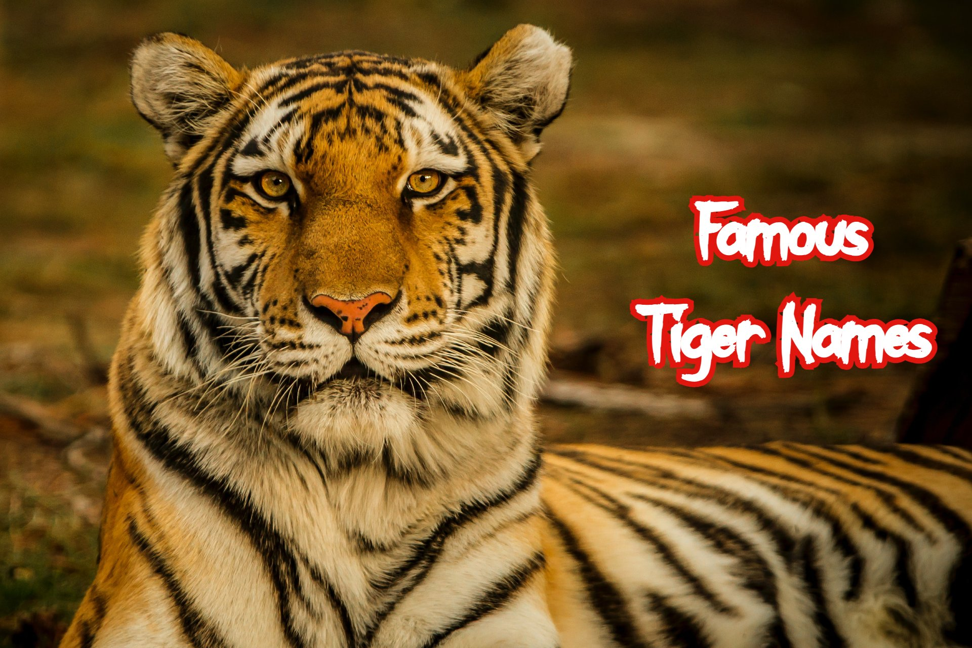 famous-tiger-names