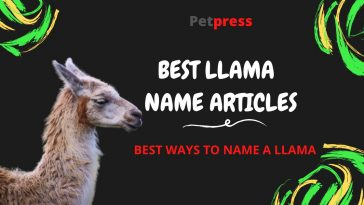 llama-name-articles