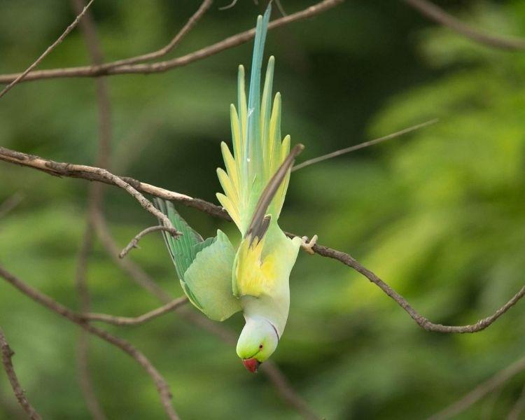 parrot name generator - tiny funny parrot