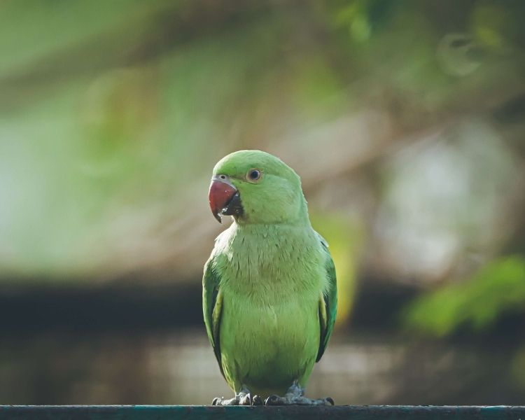 Parrot name generator - instagram page for parrot
