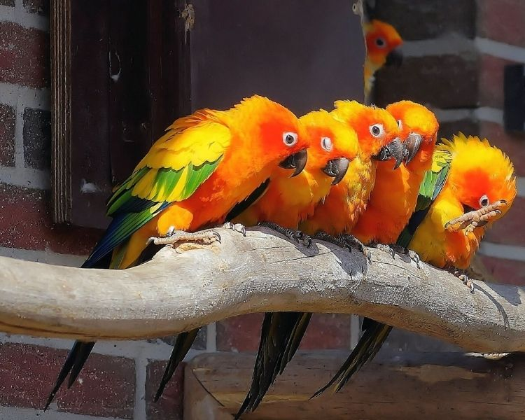 Parrot name generator - name preference for parrot