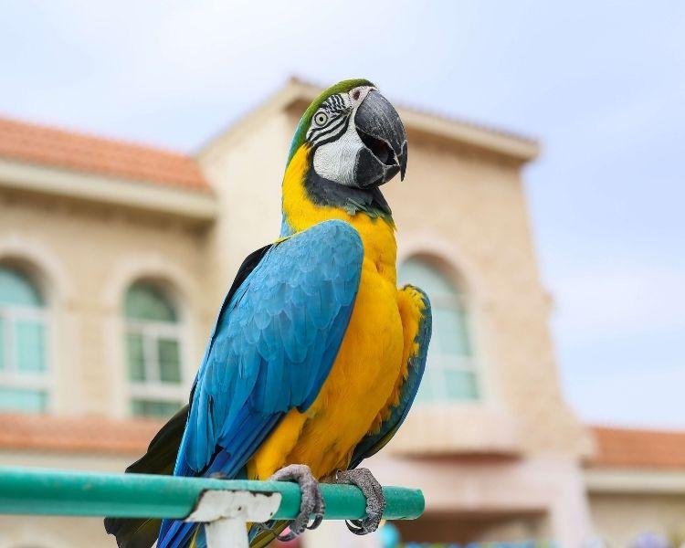 Parrot name generator - talker parrot
