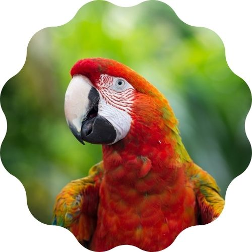 parrot name generator - find out the best name for a pet parrot