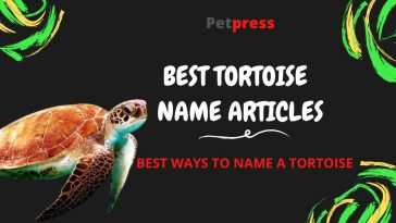 tortoise-name-articles