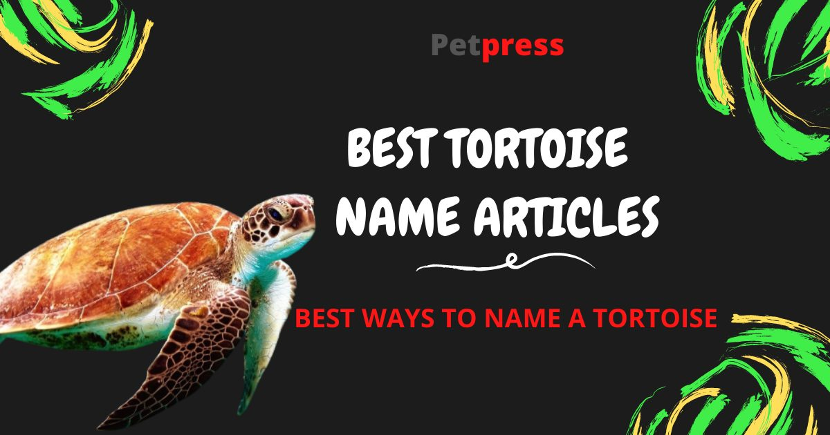 tortoise-name-articles