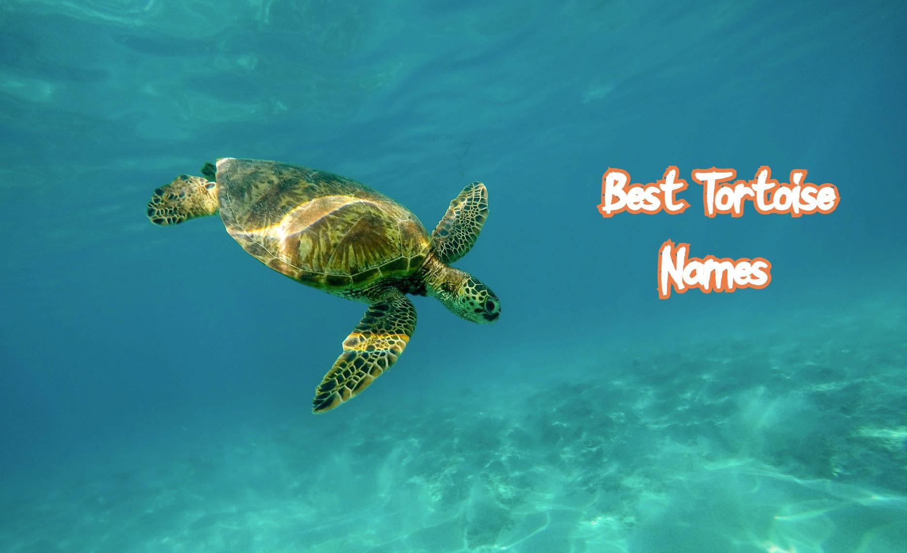best-tortoise-names