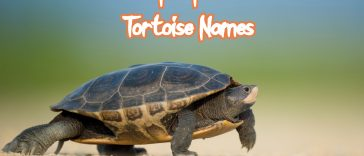 popular-tortoise-names