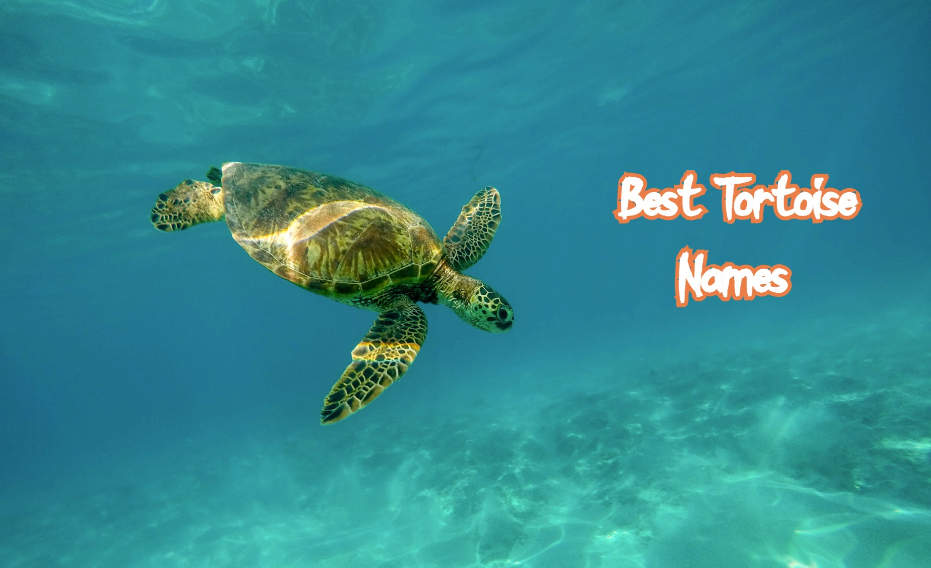 best-tortoise-names