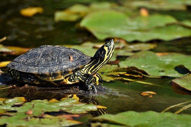 unisex-tortoise