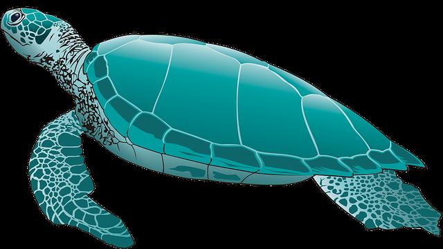 cortoon-tortoise