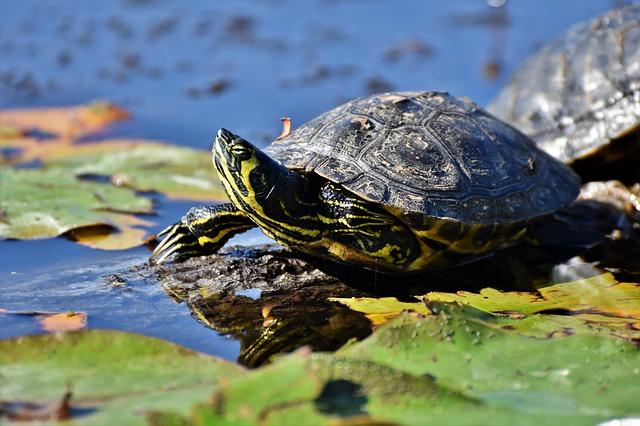 exotic-tortoise