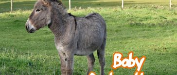 baby donkey names for naming a pet donkey