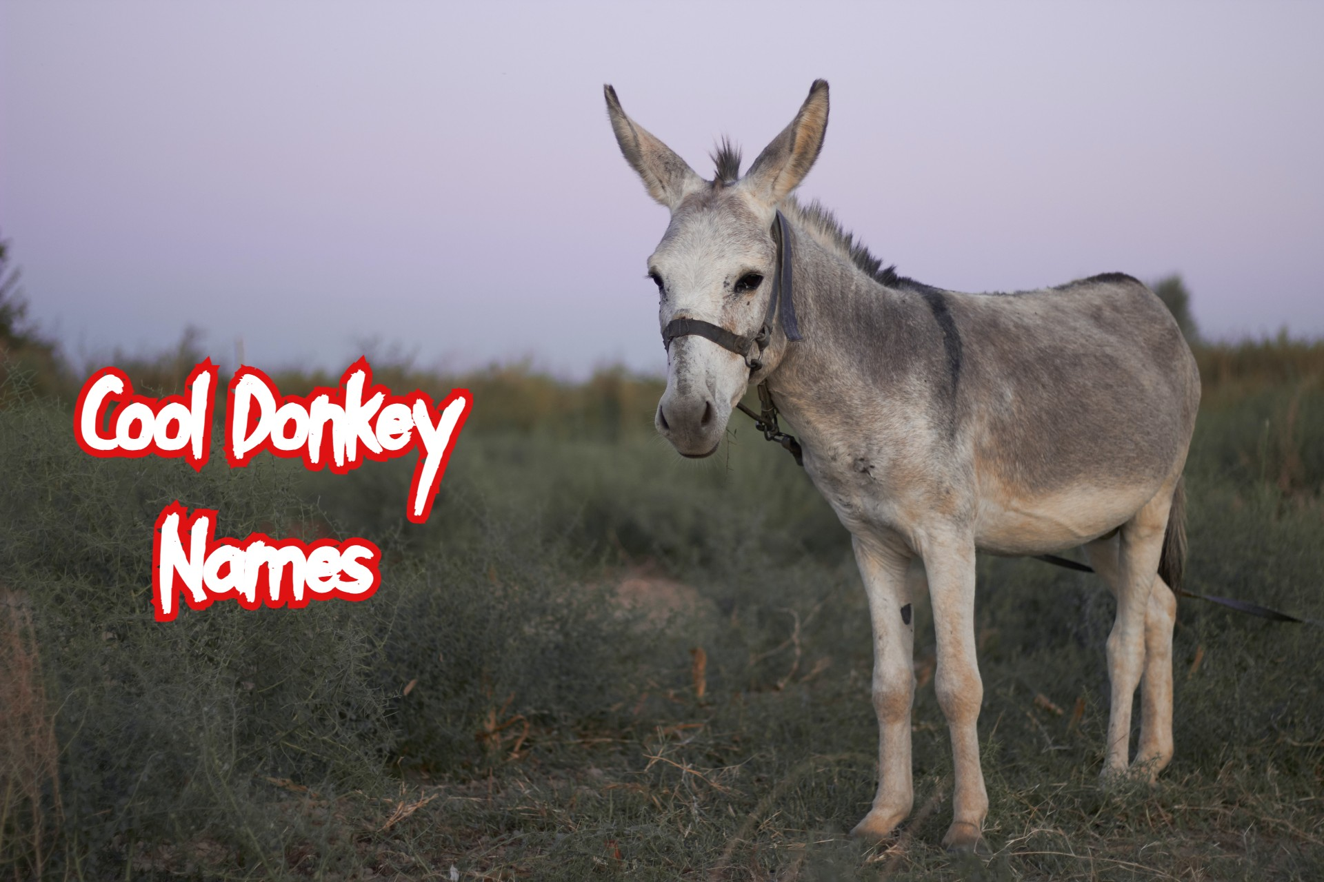 cool-donkey-names